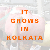 it grows in kolkata